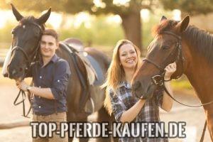 Mensch Pferd Beziehung