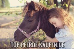 pferde kaufen auf ebay