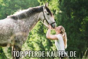 pferde kaufen tipps